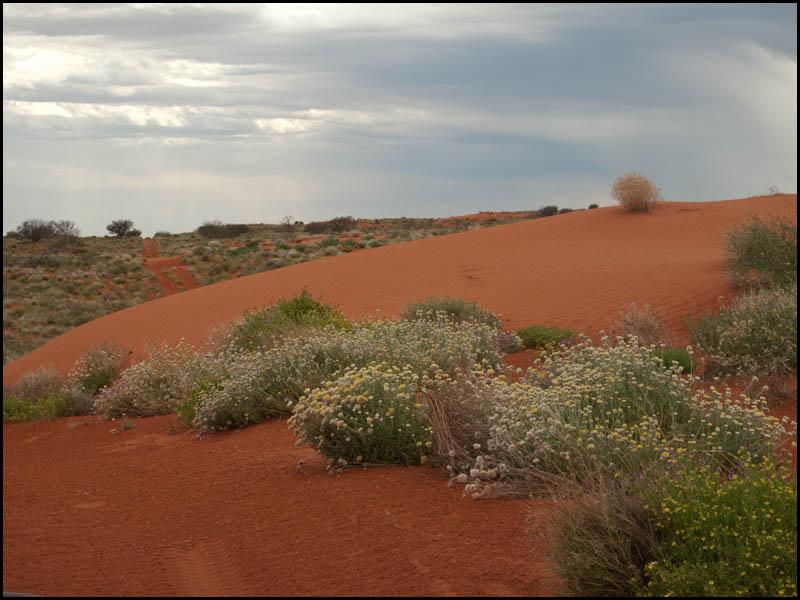 dune-garden