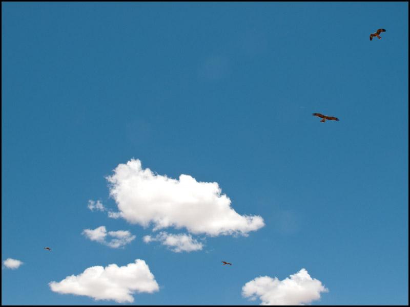 last-bit-across-the-Simpson-desert-to-birdsville