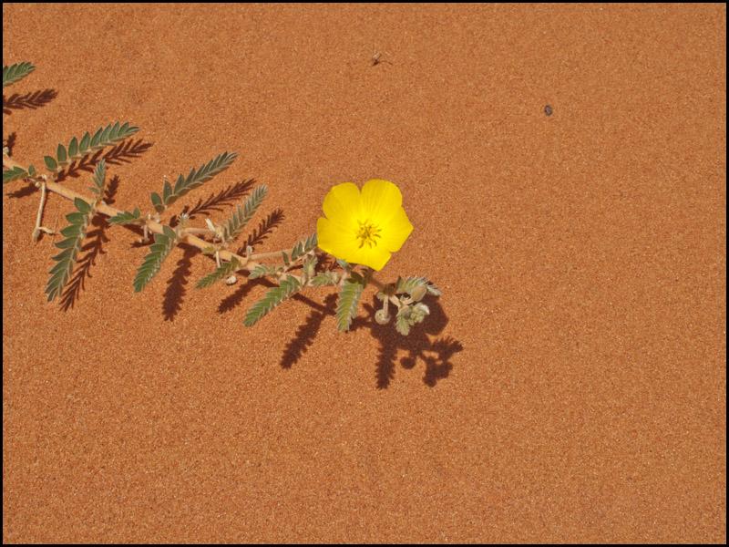 life-in-the-desert