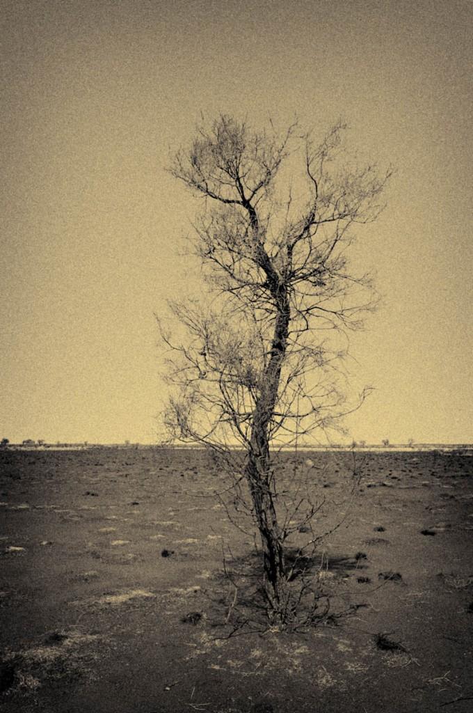 Tree-2-680x1024