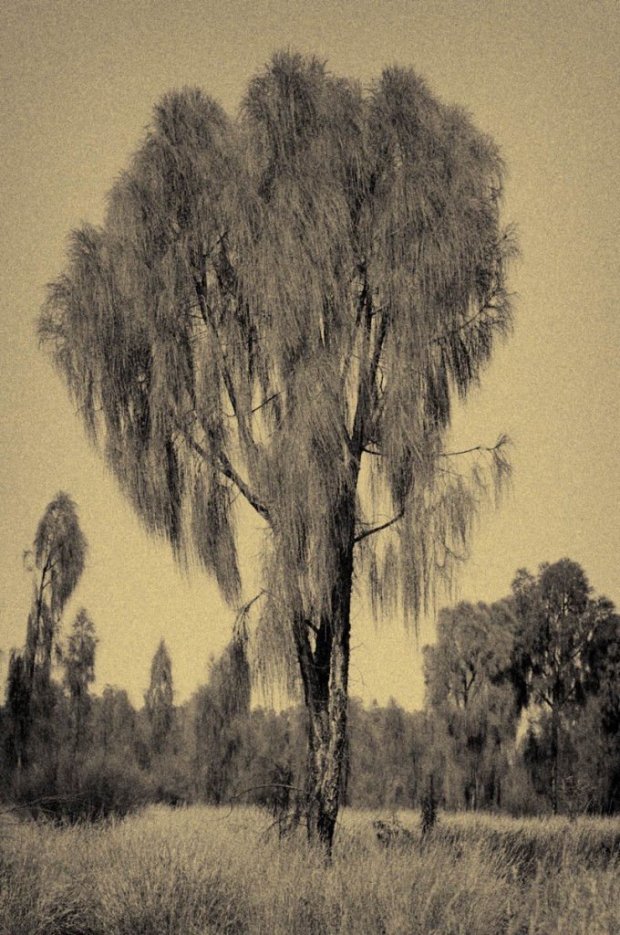 Tree-4-680x1024