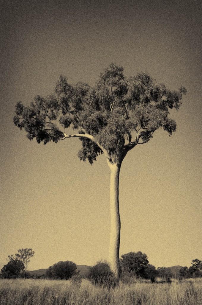 Tree-3-680x1024