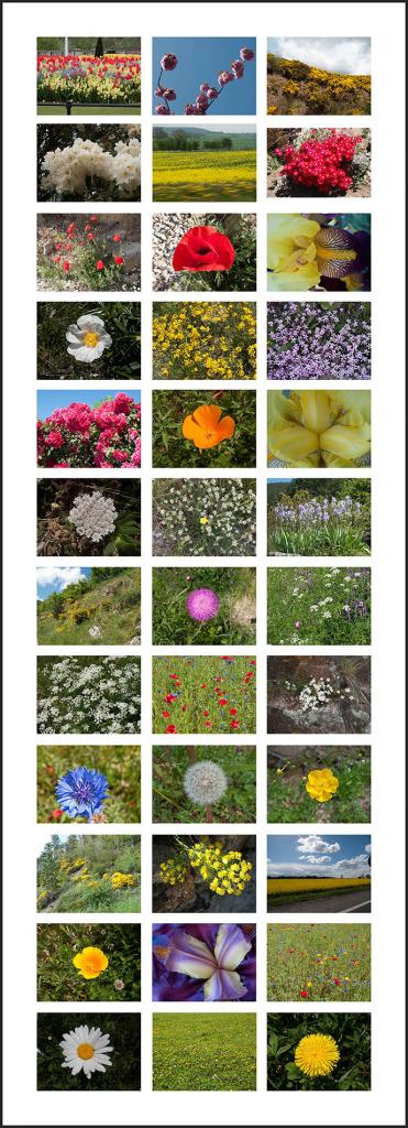 in-Bloom-web web