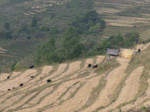 Bhutan-5754